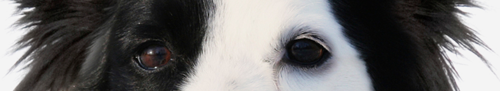 Cerberus header image 3